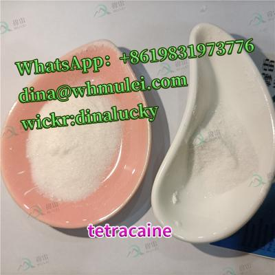 Tetracaine powder CAS:94-24-6 buy tetracaine powder price sell tetracaine powder clear customs fast and safe china supplier