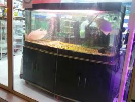 Used Aquarium For Sale with cabinet